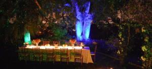party landscape light